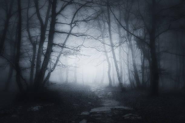 ścieżka w ciemnym i strasznym lesie - upiorny zdjęcia i obrazy z banku zdjęć