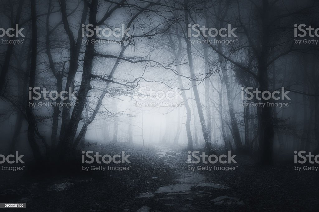path in dark and scary forest stock photo