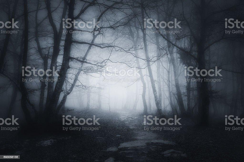 sendero en el bosque oscuro y asustadizo - foto de stock