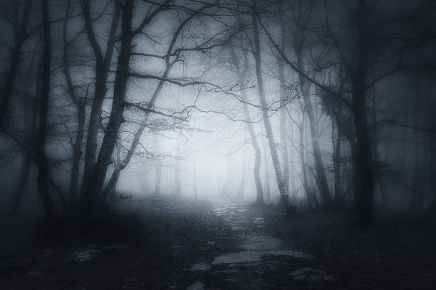path in dark and scary forest - trees in mist stock pictures, royalty-free photos & images