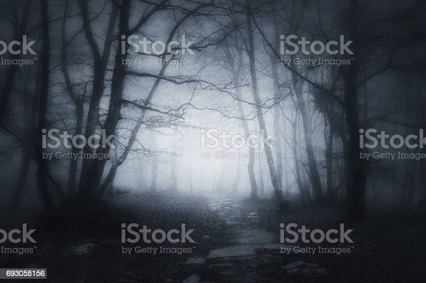 Photo of path in dark and scary forest