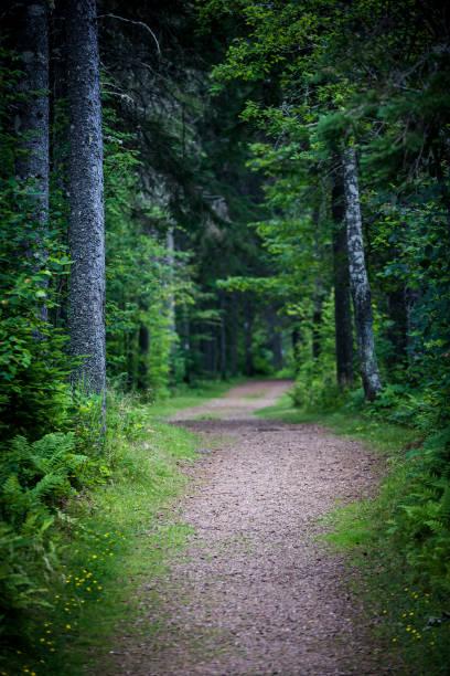 Weg im dunklen Wald launisch – Foto