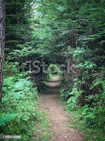 Path in forest in northern California