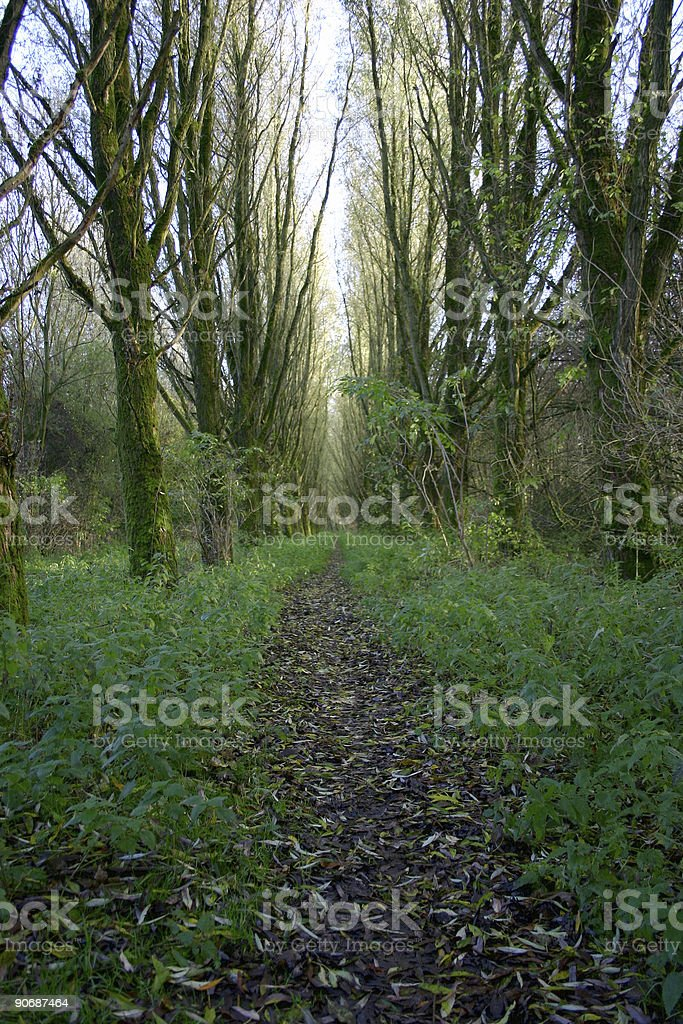 Path in forest royalty-free stock photo