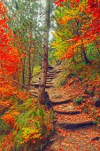 Path in natural park with autumn trees. Sunny autumn picturesque forest landscape with sunlight. Fall trees with colorful leaves background. Footpath in autumn morning scene colorful forest nature