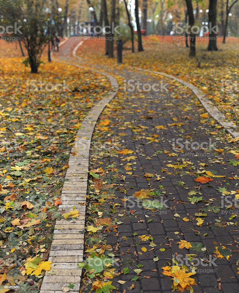 Path in park covered royalty-free stock photo