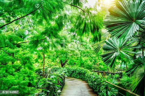 Path in public Botanic Garden of Singapore