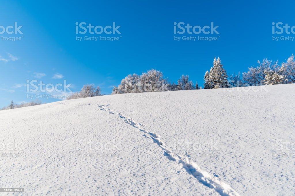 Path in snow on sunny day in Beskid Sadecki Mountains, Poland stock photo