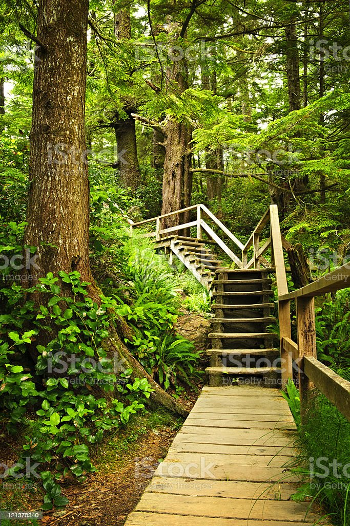 Path in temperate rainforest royalty-free stock photo