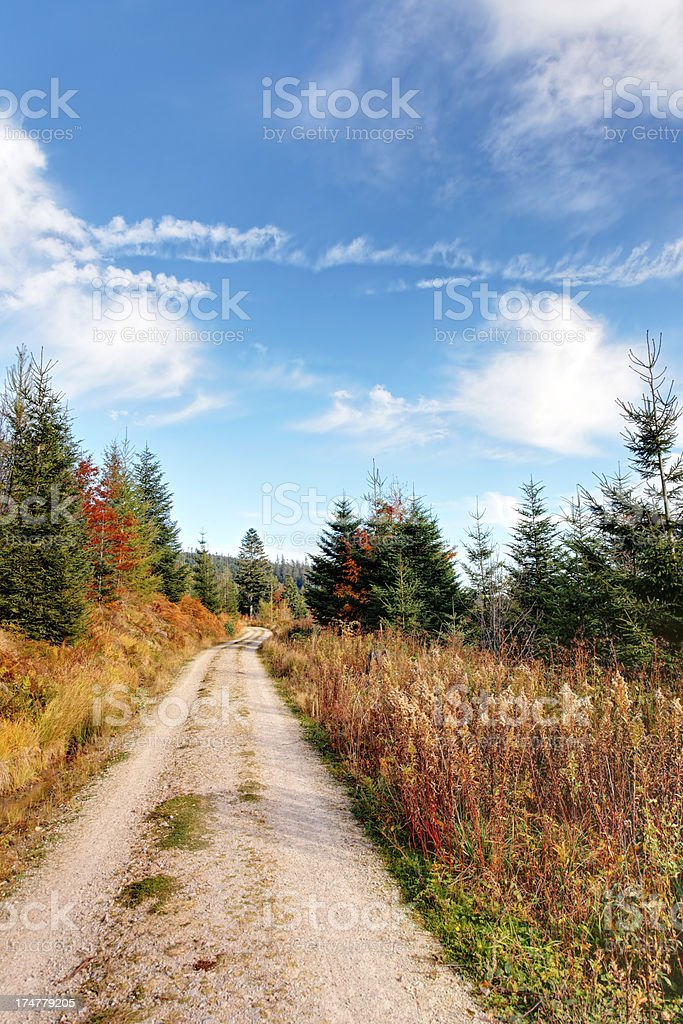 path in the Black Forest / Germany royalty-free stock photo