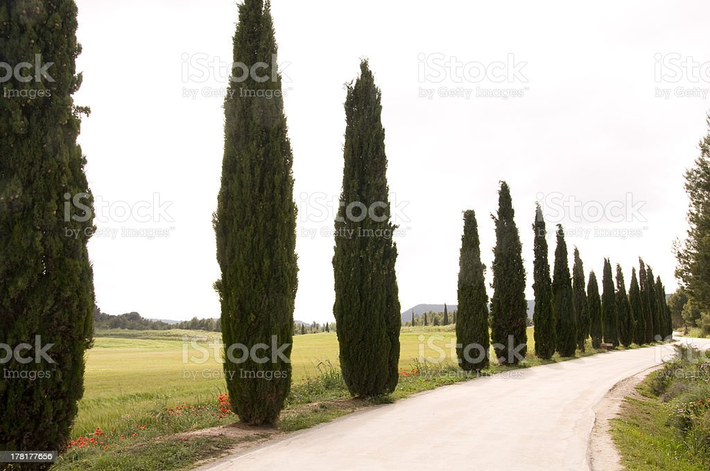 Path in the countryside royalty-free stock photo