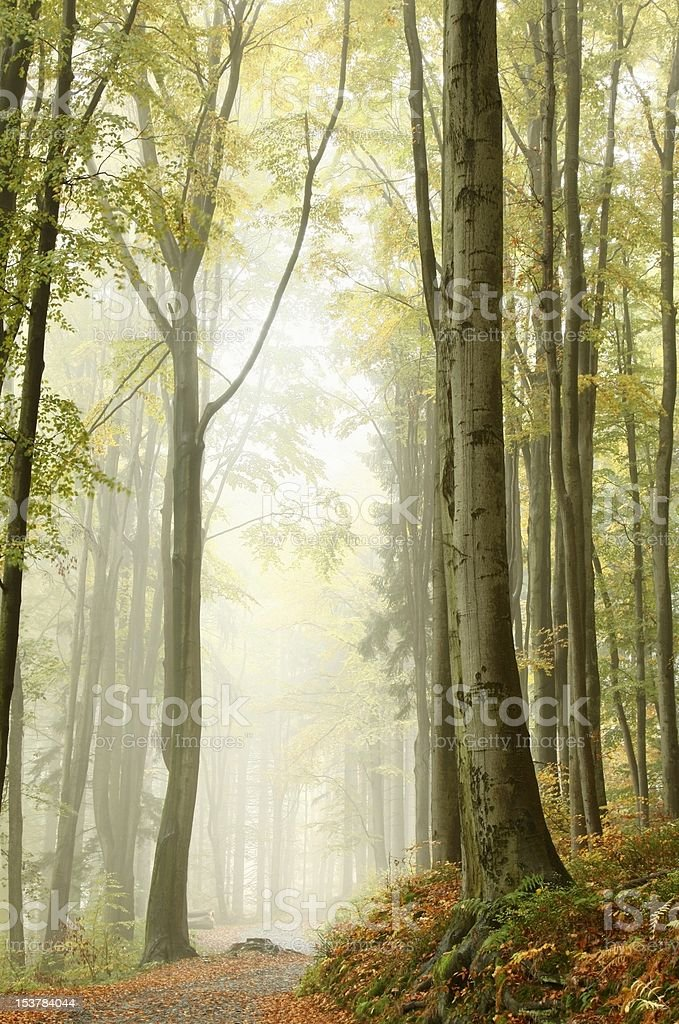 Path in the enchanted forest royalty-free stock photo