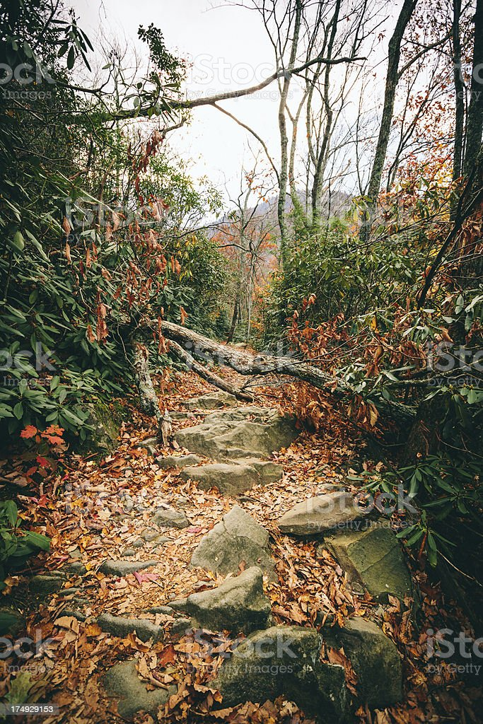 Path in the Forest, Autumn royalty-free stock photo