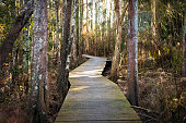 Path in the forest leads over swamp, Australia, copy space