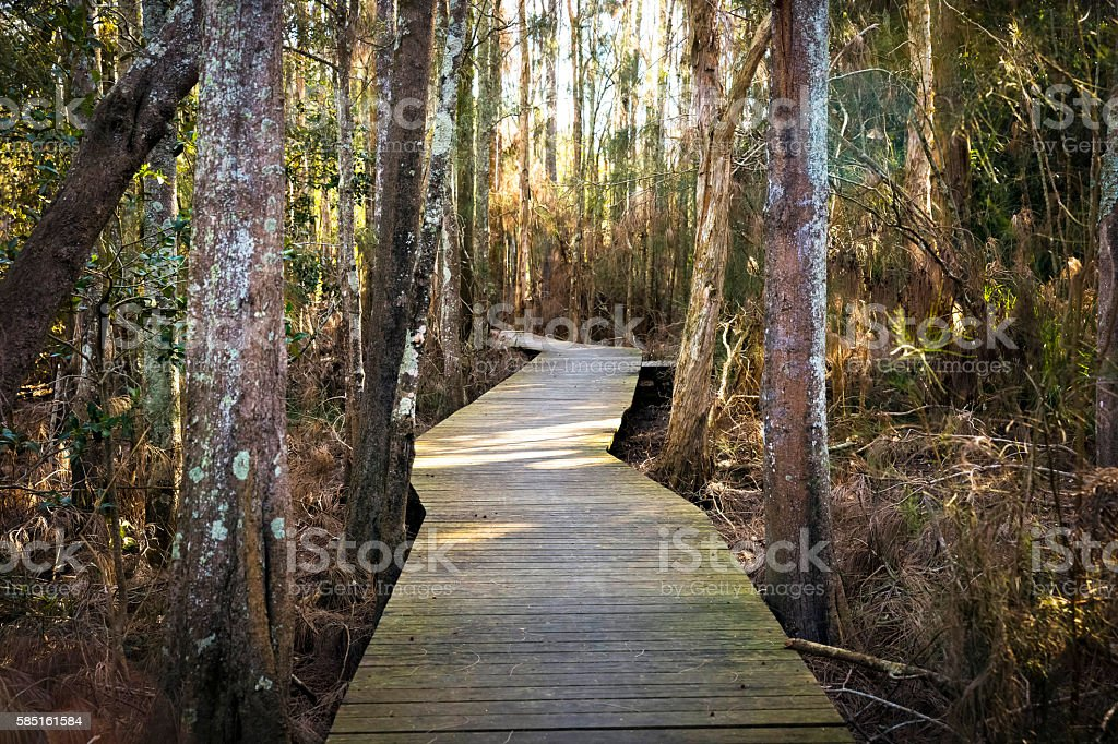 Path in the forest leads over swamp, Australia, copy space stock photo