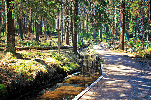 Path in the forest of Harz