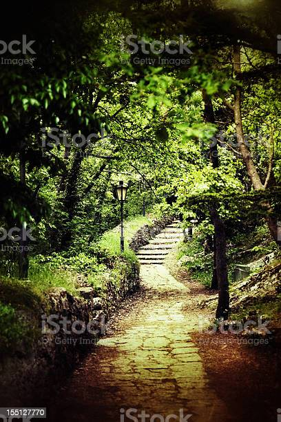 Photo of Path in the forest