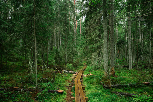 Path In the Forest - Photo