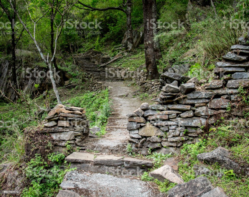 Path in the Forest 免版稅 stock photo