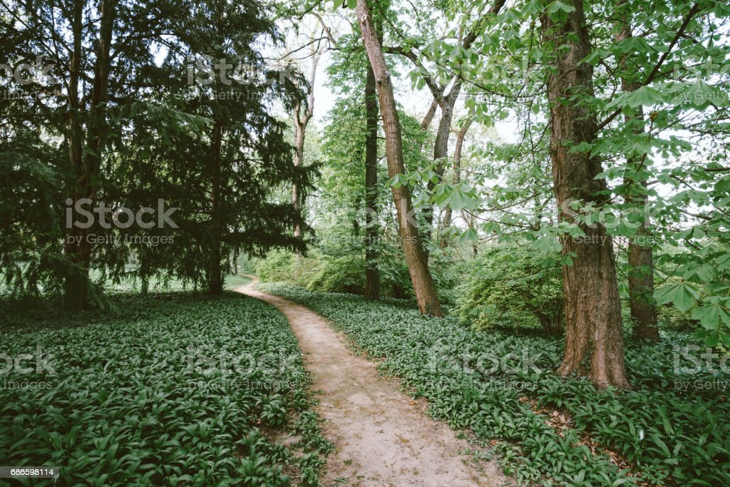 Path in the forest royalty-free stock photo