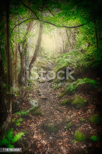 Path in the forest with trees surrounding the path and sunlight in the background