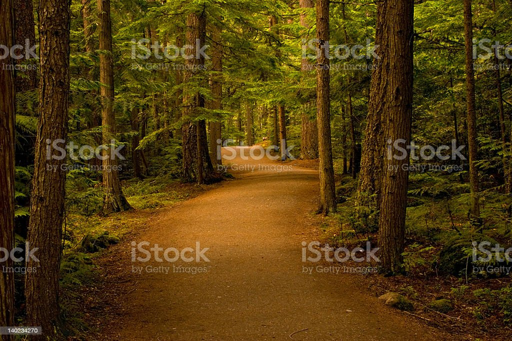 Path in the Forest/Woods stock photo
