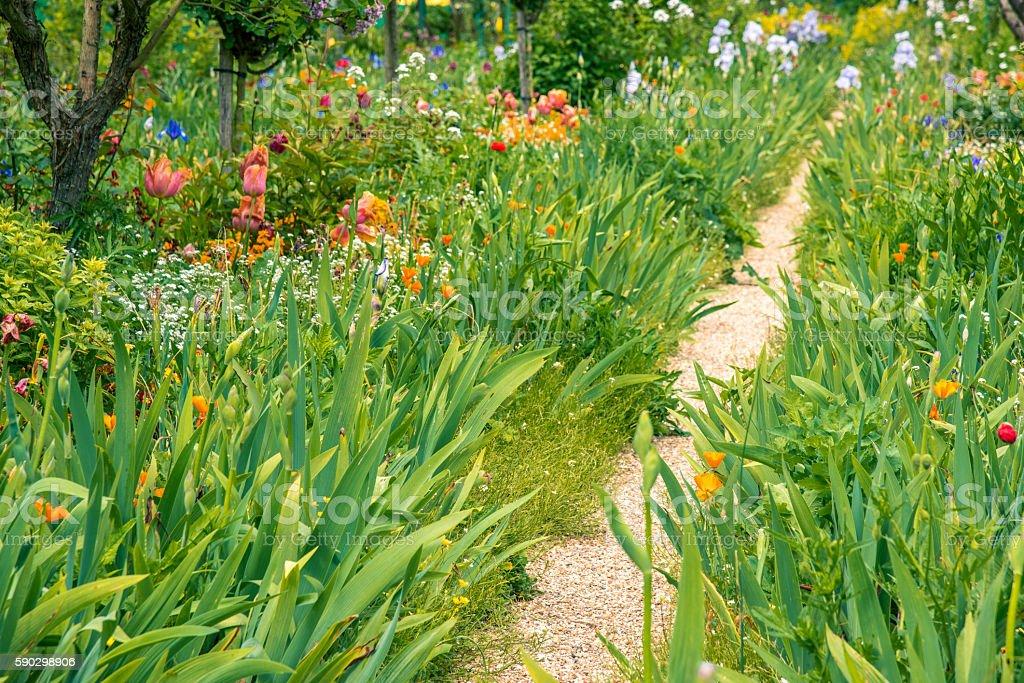 Path in the garden royaltyfri bildbanksbilder