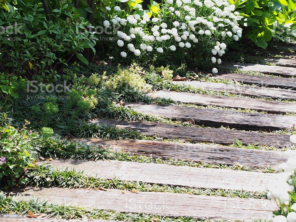 path in the garden stock photo