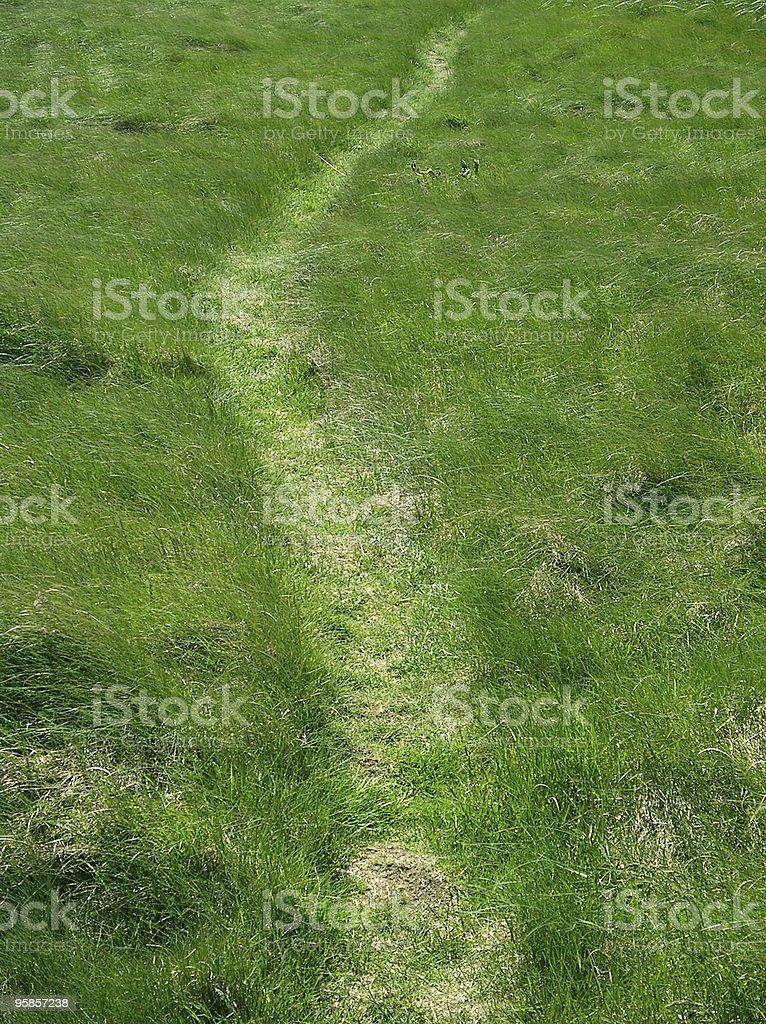 Weg in Gras – Foto