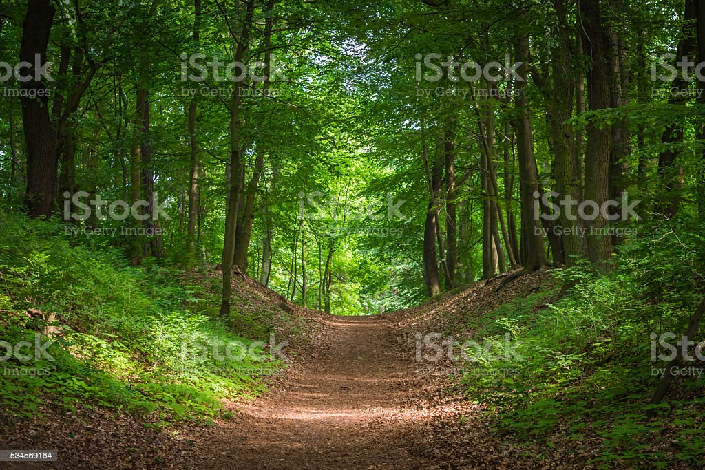 Path in the green forest in the sunlight – zdjęcie