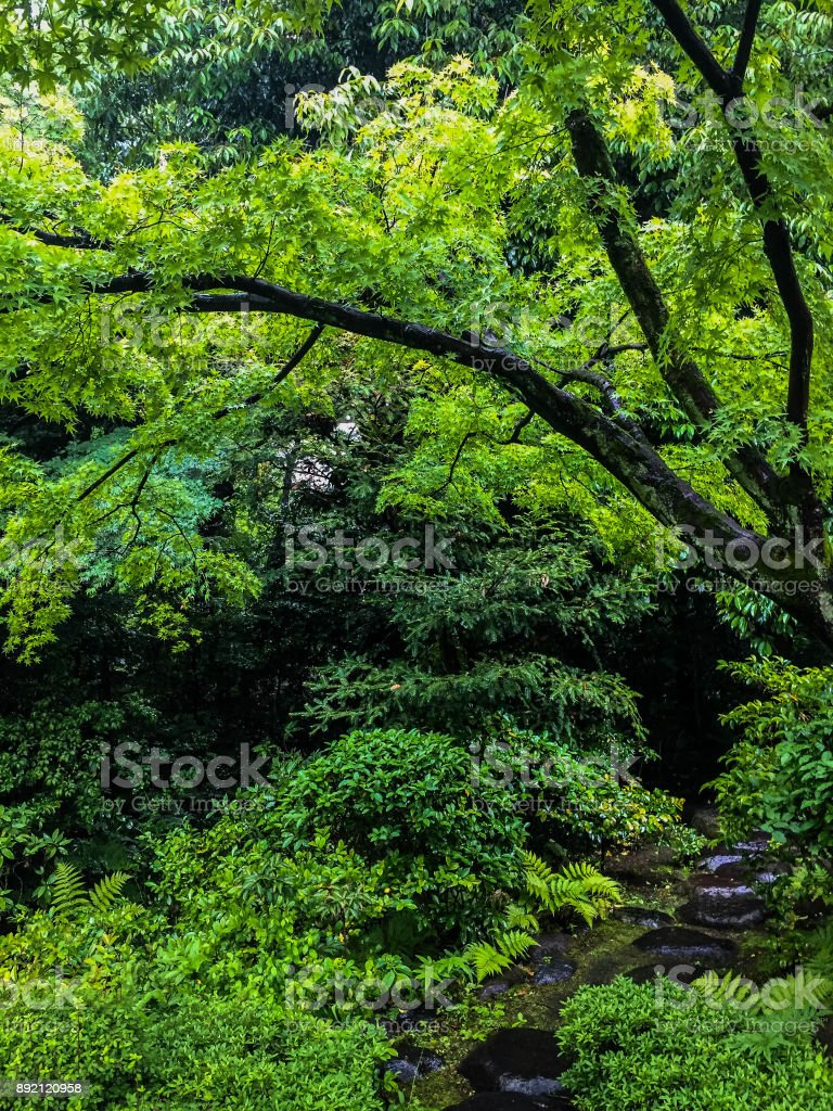 A path in the Japanese garden. stock photo