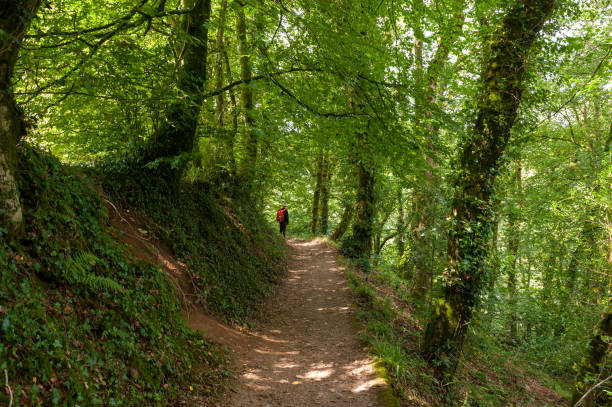 Path in the Lydford Gorge Natural Reserve, Devon, UK stock photo