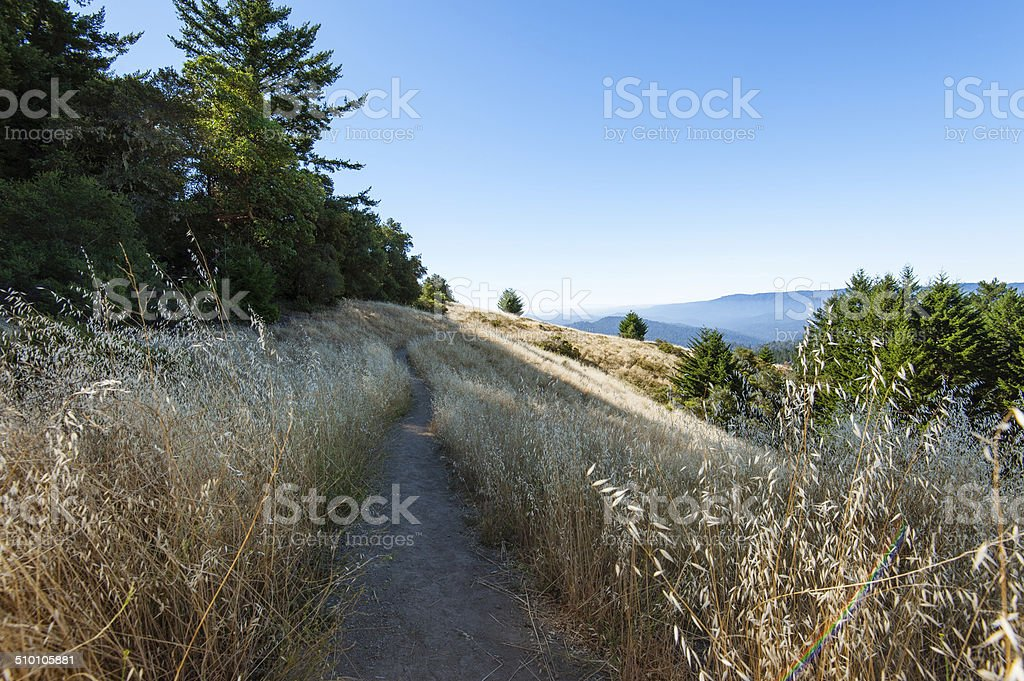 Path in the mountain stock photo