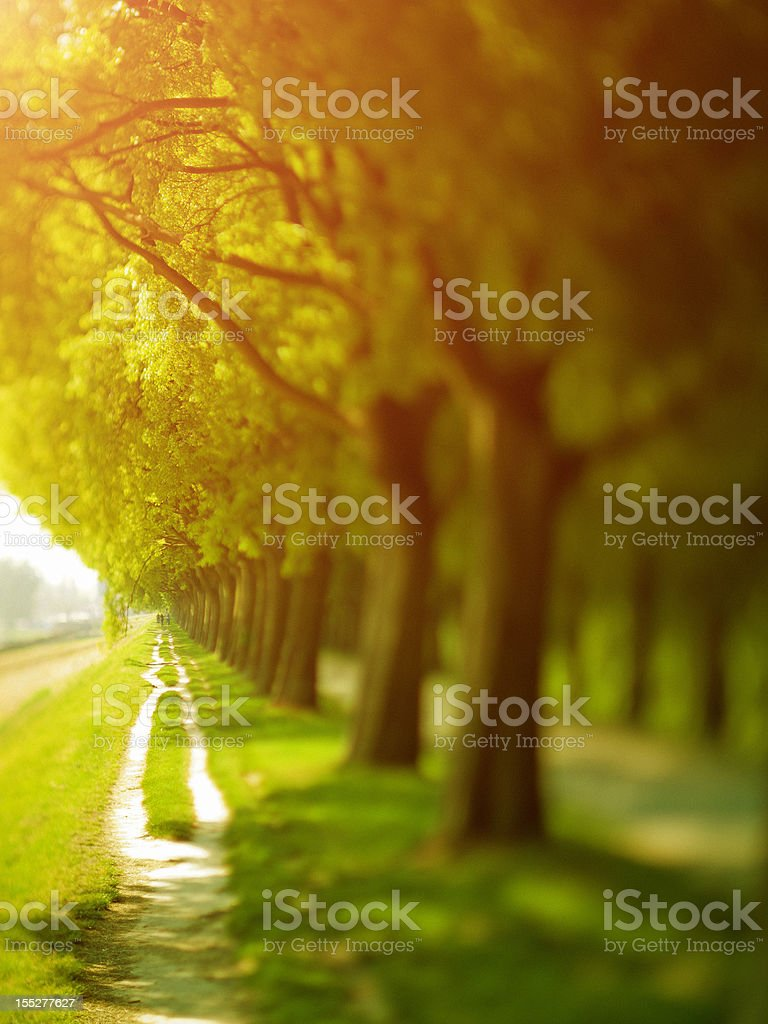 Path in the Nature royalty-free stock photo