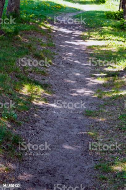 Foto de Caminho No Parque e mais fotos de stock de Calor