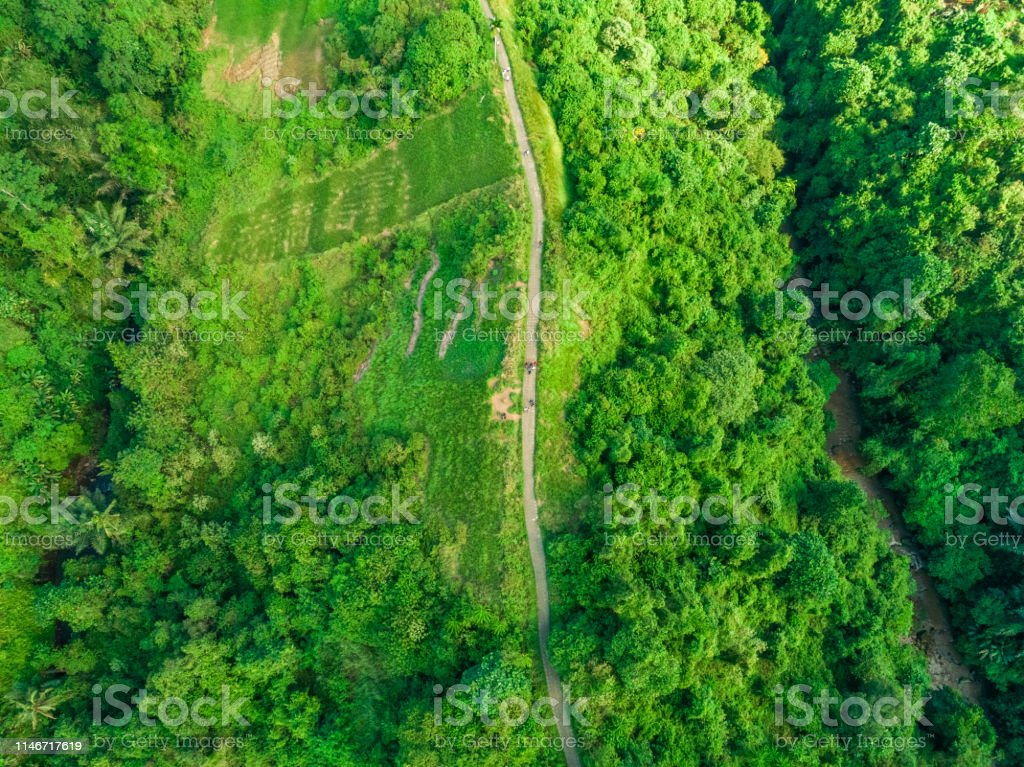 Path in the rainforest from above