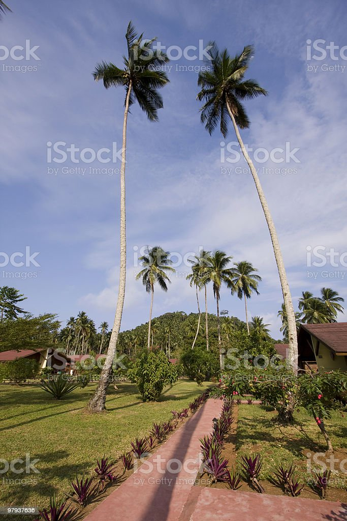 path in the resort royalty-free stock photo