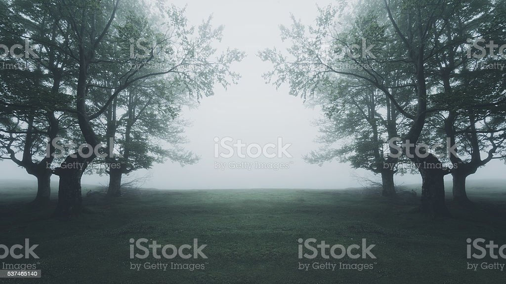 path in the scary foggy forest stock photo