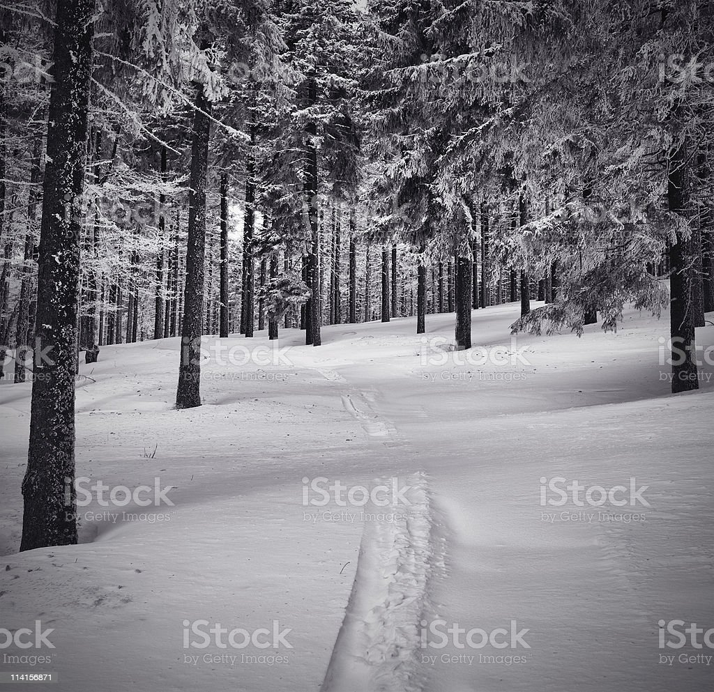 Path In The Snow stock photo