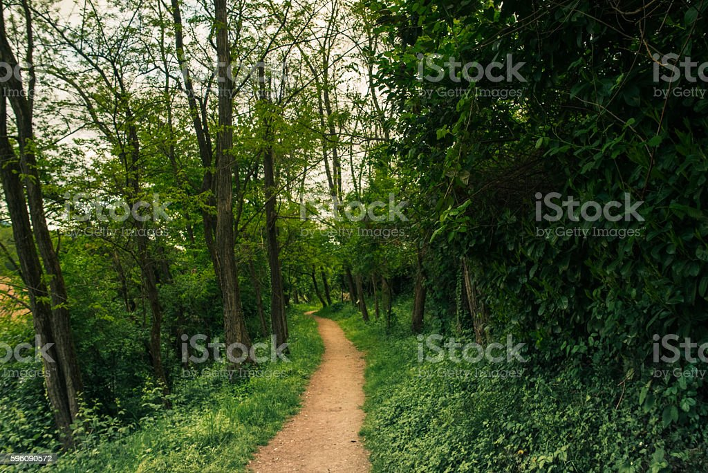 Path in the wild vegetation royalty-free stock photo