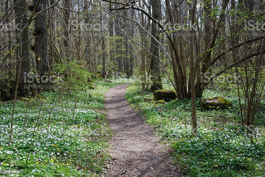 Path in the woods at spring stock photo
