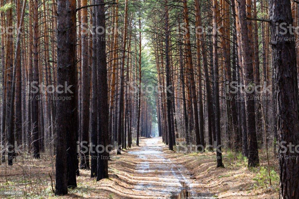 Path in the woods - Zbiór zdjęć royalty-free (Bez ludzi)