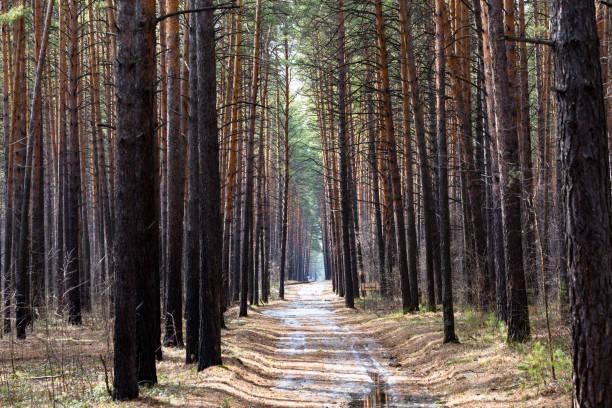 Path in the woods – zdjęcie