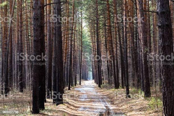 Ścieżka W Lesie - zdjęcia stockowe i więcej obrazów Bez ludzi