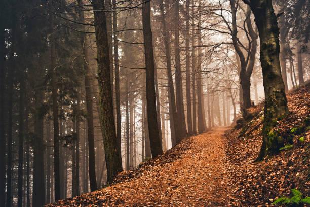 path in the woods with fog in background, autumn season - ломбардия стоковые фото и изображения