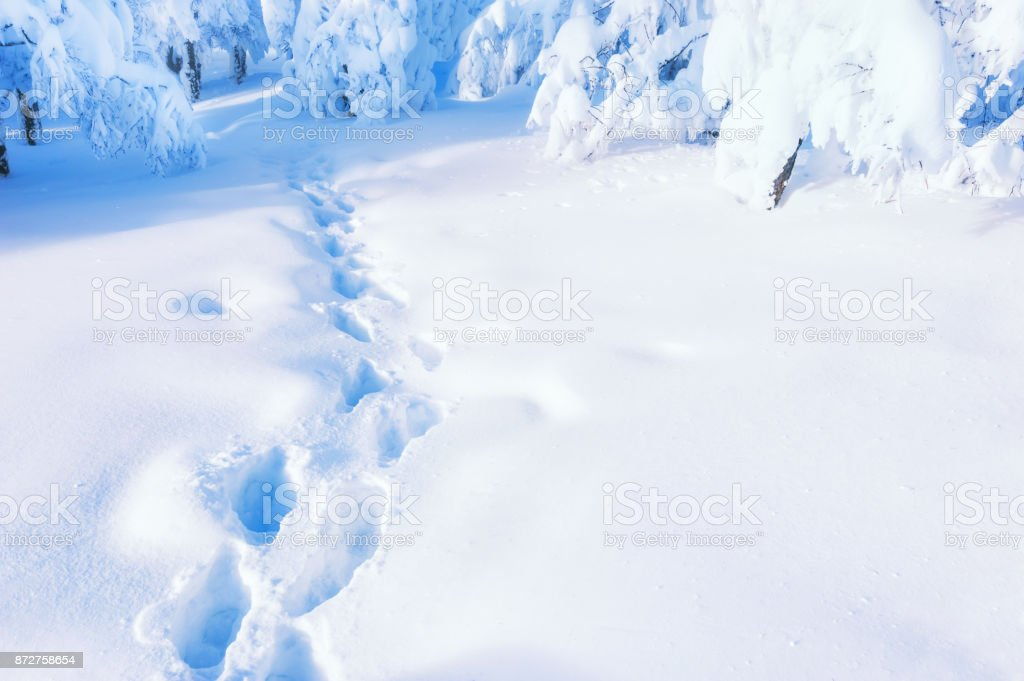 Path in winter forest after snowfall stock photo