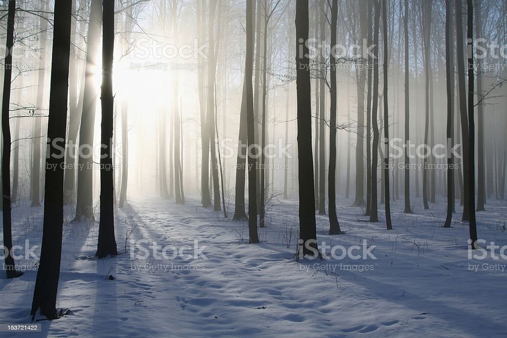 Path in winter forest on a misty morning stock photo