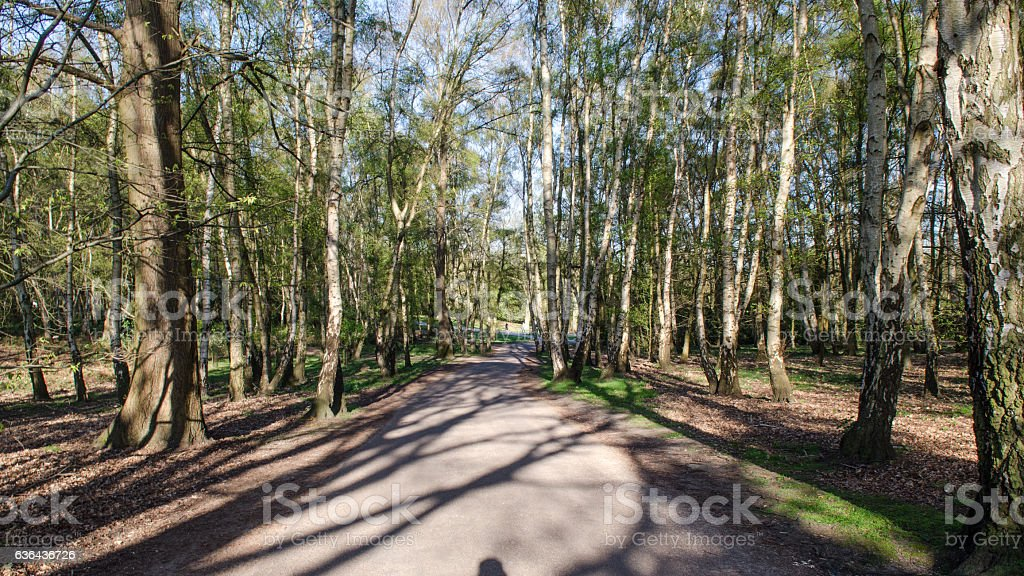 Path in woodland at Virginia Water stock photo