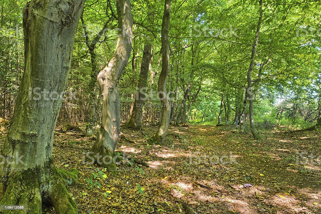Path in Woods - Fairytale Forest royalty-free stock photo