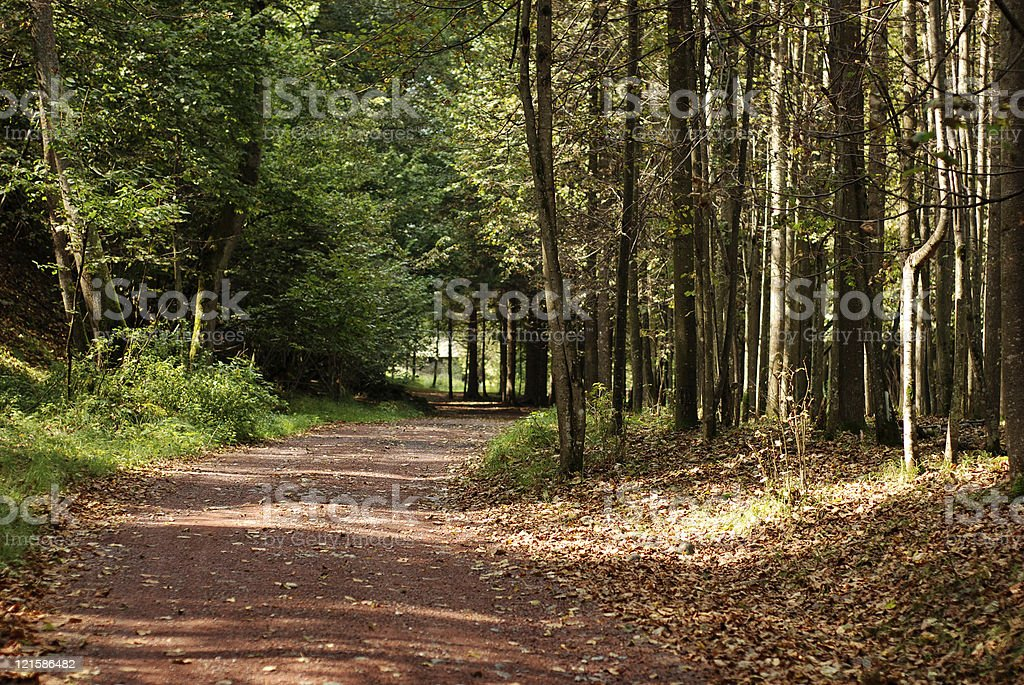 Path into the forest royalty-free stock photo